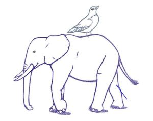 bird on elephant